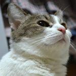 ペットロス#3◆飼い猫の旅立ち◆プラスの影響をこの世に残すことの重要性