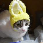 ペットロス#1◆たった今 飼い猫が旅立った◆飼い主の心の状態は?
